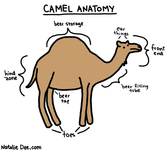 Natalie Dee comic: camel anatomy * Text:   CAMEL ANATOMY   hind zone   beer storage   beer tap   toes   ear things   front end   beer filling tube