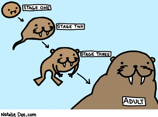 Natalie Dee comic: walrus life cycle * Text: STAGE ONE